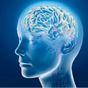 БАДы для мозга