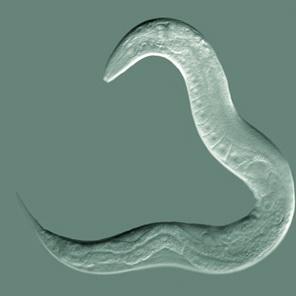 бады от паразитов в организме человека список